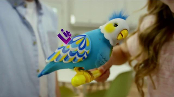 little live pets bird cleverkeet instructions
