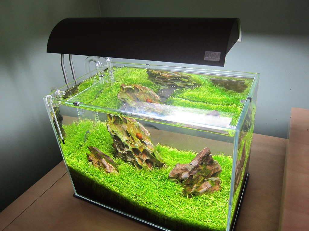 fluval edge filter setup instructions